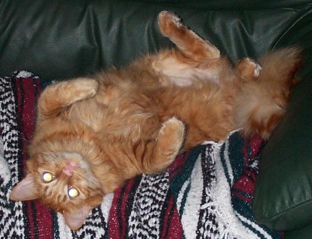 Brady Cat